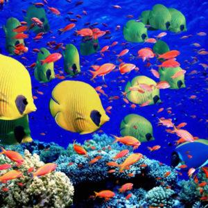 Морски риби