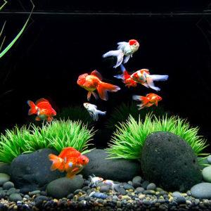 Сладководни риби и безгръбначни