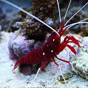 Безгръбначни и корали
