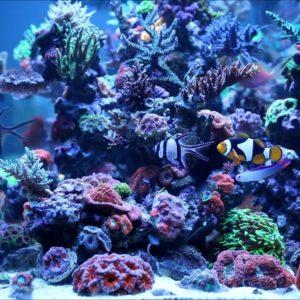 Морски риби и безгръбначни